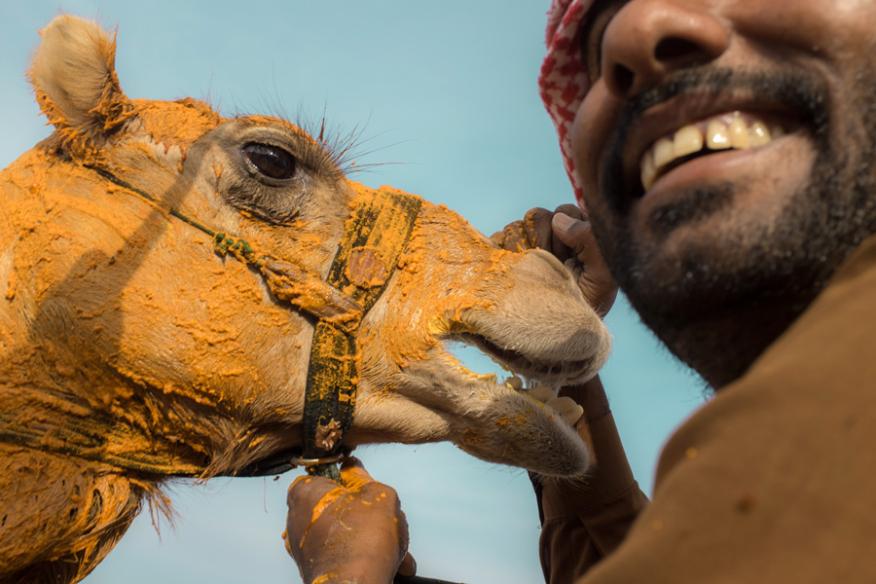 Al Wathba Camel Race